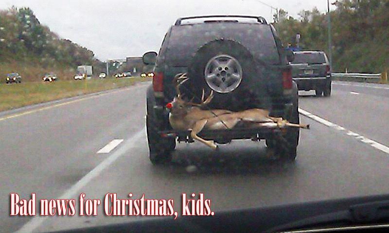 Deer-on-car-5-edited2